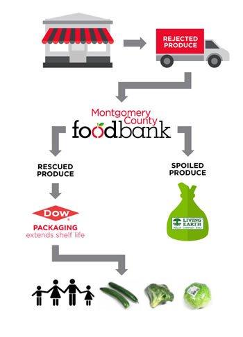 Food-cycle-graph